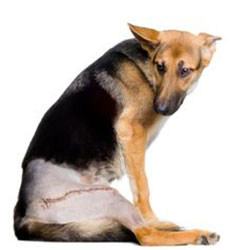 Canine Hip Dysplasia - Are You Aware Of This??