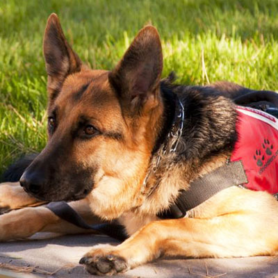 The Life And Benefit Of A Service Dog