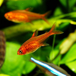 How To Care For Aquarium Fish